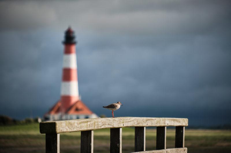 Vogel auf dem Brückengeländer mit dem Leuchtturm Westerheversand im Hintergrund welcher hervorragend in der Unschärfe versinkt